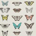 behang Harlequin papilio Amazilia-Wallpapers 111077