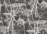 Behang Cole and Son Cow Parsley 66-7046 Contemporary Restyled Luxury By Nature