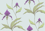 Behang Cole and Son Orchid 66-4027 Contemporary Selection Luxury By Nature