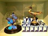 2 blauwe vlinders morpho vlinders 3