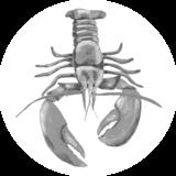 Catchii Zwart-Wit Kreeft Behangcirkel