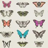behang Harlequin papilio Amazilia-Wallpapers 111079