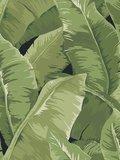 Palmen Behang Jaima Brown Charleston jb50700 Charleston Home Collectie Luxury By Nature
