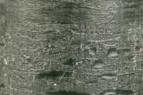 Donkergroene Stompkaars Rustiek