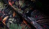 Moooi Menagerie of Extinct Animals Behang (ARTE)MO2071