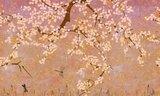 ELITIS Les cerisiers sauvages TP 289 02 behang