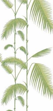 Palm Wit Groen