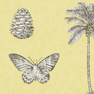 Cocos
