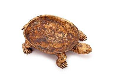 Schildpadschaal 35 x 24 cm