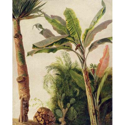 Les Dominotiers Banana Tree Behang