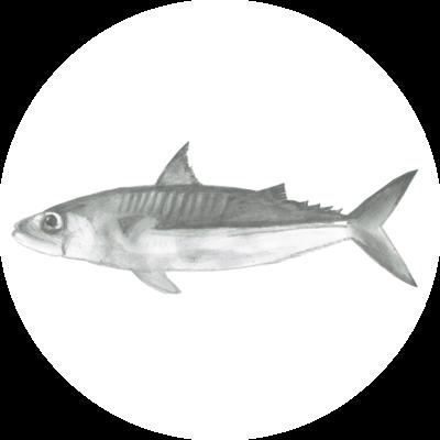 Catchii Zwart-Wit Vis Behangcirkel