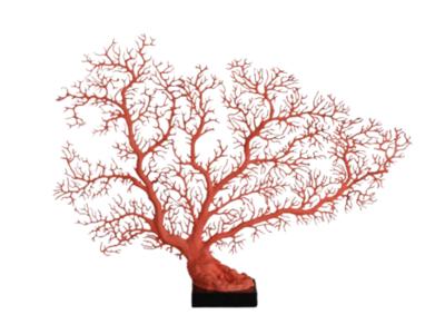 Rode Koraalwaaier Op Zwart Voetje (Afgietsel) - Imperial Red Gorgonian Coral