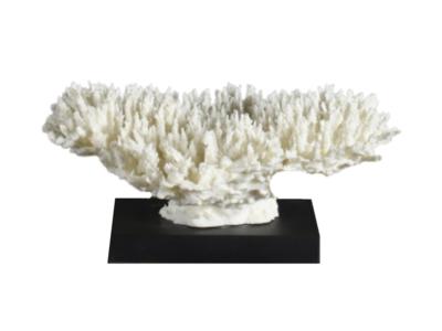Koraalstuk Op Zwarte Voet (Afgietsel) - Seriatopora hystrix