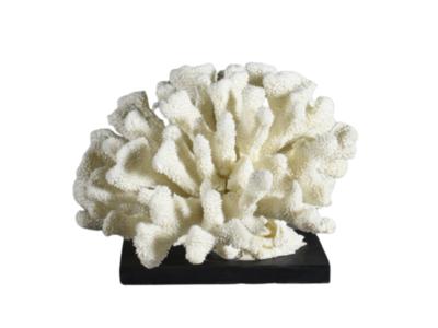 Tafelstuk Wit Koraal Op Zwart Voetje - Pocillopora Meandrina