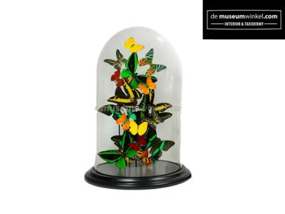 Tropische Vlinderstolp XL