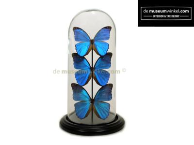 Blauwe Vlinderstolp metMorpho Menelaus vlinders