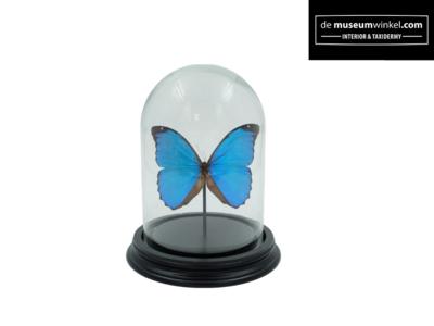 Blauwe Vlinderstolp metMorpho Didius vlinder