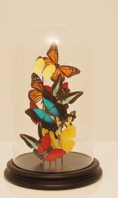 Vlinderstolp: Multi Color Vlinders