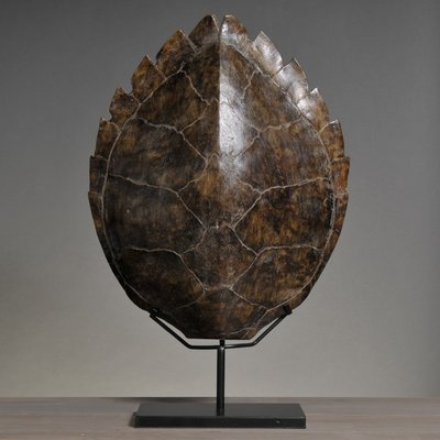 Schildpadschild Karet 51 cm Afgietsel