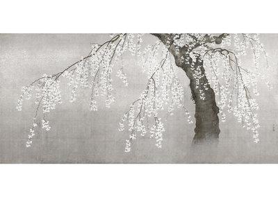 Bloesem Behang Kersenboom Zilver - Grijs