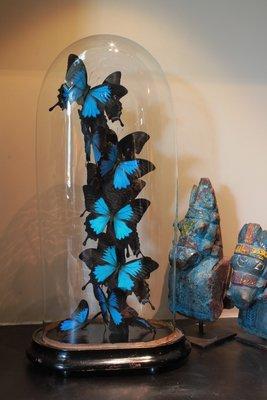 360° Vlinderstolp: 14 Blauwe Vlinders morpho