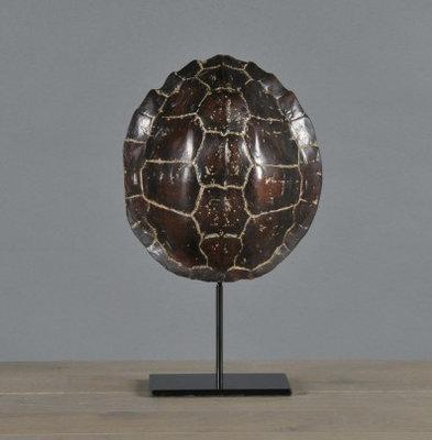 Schildpadschild Op Voet 22 cm Landschildpad Donkerbruin