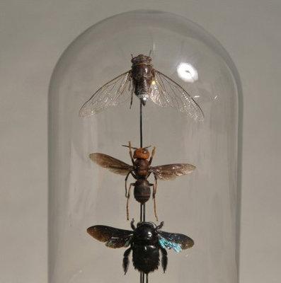 Insecten Stolp