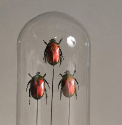 Stolp Insecten Set Van 3 - 18 cm