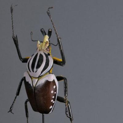 Insecten In Stolp - 30 cm