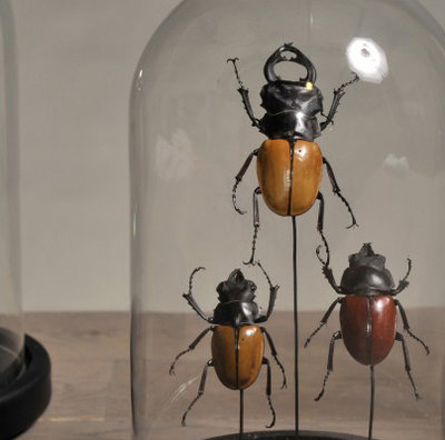 Drie Insecten In Stolp