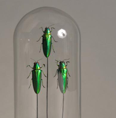 Insecten In Stolp - 18 cm