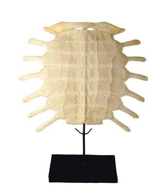 Zoetwaterschildpadschild Skelet Groot
