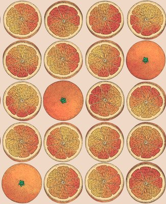 Fornasetti Arance Behang Sinaasappels