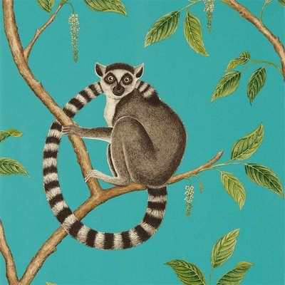 Sanderson Ringtailed Lemur Behang