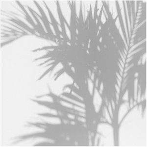 Les Dominotiers Palm Shadow Behang