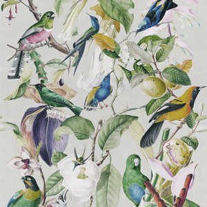 Mind the Gap Tropical Birds Behang Designer Wallpaper 2017 WP20172